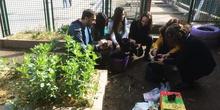 El huerto en febrero_CEIP FDLR_Las Rozas 9