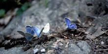 Bebedero de mariposas (Lepidoptera)