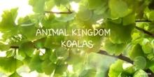 Documentary: KOALAS