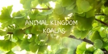 Documentary: KOALAS