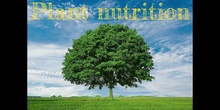 3º - PLANT NUTRITION (PHOTOSYNTHESIS) - NATURAL SCIENCE - PATRICIA R - FORMACIÓN