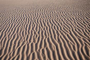 Huellas de roedor en la arena, Namibia