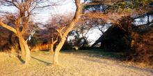Amanecer dorado, Namibia