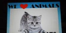 """my tv programe: Marta and Sofia """"Cats"""""""