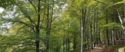 otoño poema