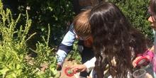 2019_06_11_4º observa insectos en el huerto_CEIP FDLR_Las Rozas 37