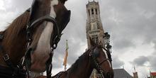 Caballos en la Plaza Mayor con la Torre Belfry de fondo, Brujas,