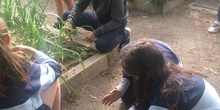 2019_05_Los alumnos de 4º en el Huerto_CEIP FDLR_Las Rozas 29