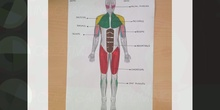 PRIMARIA 2B MUSCLES NATURAL SCIENCE. FORMACIÓN