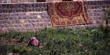 Mujer trabajando en un huerto, con alfombra tendida, Yemen