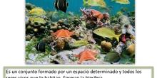 Tema 3: Los ecosistemas. 4º de primaria