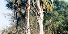 Hábitat semi-tropical, Botswana