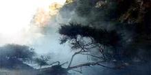 árbol en ribera de rio ácido en Waimangu, Nueva Zelanda