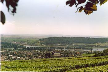 Río y viñedos en Rhüdesheim, Alemania