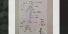 PRIMARIA 2B MY BODY NATURAL SCIENCE. FORMACIÓN