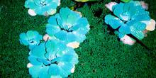 Flores azules tropicales