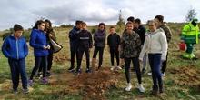 Plantación en el parque forestal de Valdebebas 2019