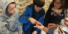 2020_02_27_3º visita Insectpark (4)_CEIP FDLR_Las Rozas 12