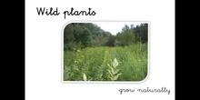PRIMARIA - 1º - WILD AND CULTIVATED PLANTS - CIENCIAS DE LA NATURALEZA - FORMACIÓN