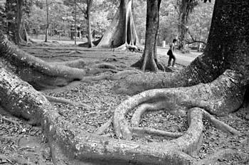 Parque tropical, Indonesia