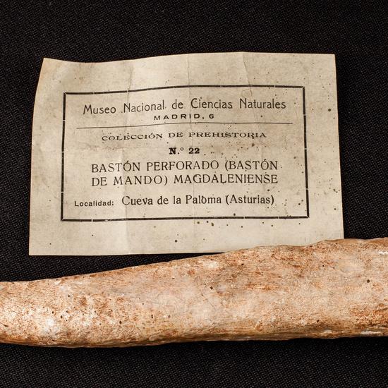 IES_SANISIDRO_MUSEO_Paleologia_034
