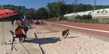 olimpiadas 6