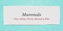 P2_NS Mammals B
