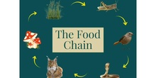 PRIMARIA - 5° - FOOD CHAIN - NATURAL - ANGIE