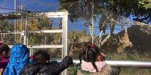 Excursión al zoo 5 años, 1º y 2º Luis Bello 21