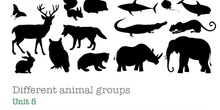 PRIMARIA 1º - CIENCIAS DE LA NATURALEZA - ANIMAL GROUPS