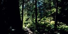 Bosque en las Montañas Rocosas