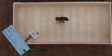 IES_CARDENALCISNEROS_Insectos_019