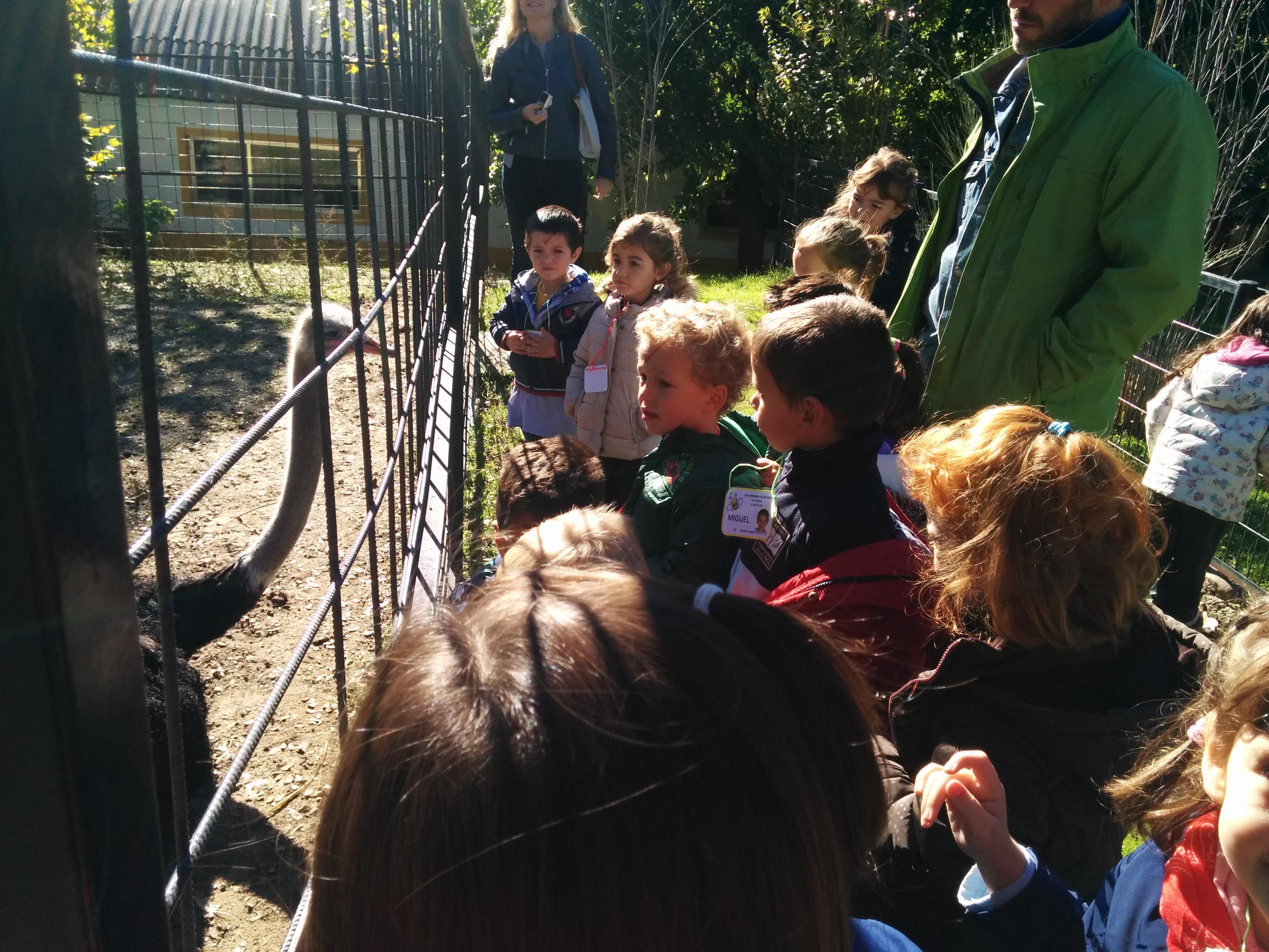2016_inf 4 años a visita la granja 18