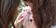 2019_06_07_Los alumnos de Quinto observan los insectos del huerto_CEIP FDLR_Las Rozas 21