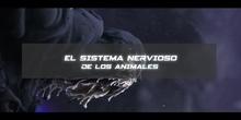 El sistema nervioso de los animales