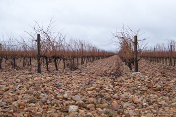 Viñedo en invierno, Segovia