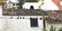 Techo con palomas, Mouraria, Lisboa, Portugal