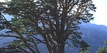 árbol en Valle de Ordesa