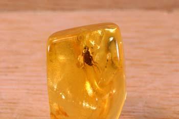 Díptero en ámbar (Insectos) Oligoceno