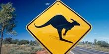 Señal de tráfico (peligro canguros), Australia