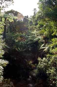 Bosque tropical y río, Nueva Zelanda