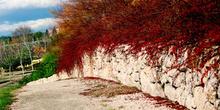 Camino con arbustos rojos