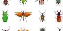 Insectos marinos