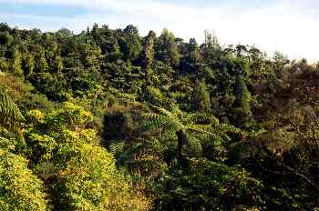Bosque tropical, Nueva Zelanda