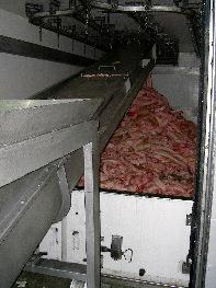 Pieles de cerdo