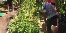 2019_06_11_4º observa insectos en el huerto_1_CEIP FDLR_Las Rozas