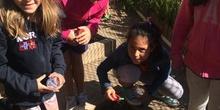 2019_06_11_4º observa insectos en el huerto_CEIP FDLR_Las Rozas 18