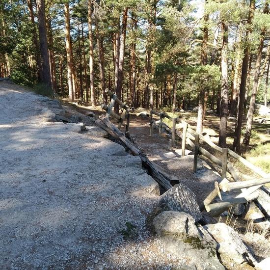 Ruta por el bosque de Mojonovalle 5
