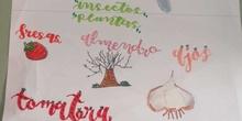 El huerto en febrero_libro viajero y guisantes_CEIP FDLR_Las Rozas