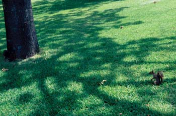 Ardillas en un parque